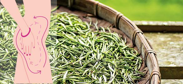 Le thé vert, actif des gélules Brûleur Fort Biopur