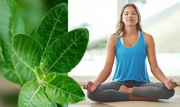 Restez zen avec Biopur